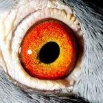 'Astrid'...eye shot.