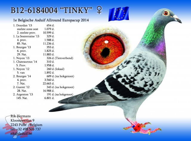 'Tinky' the winner yesterday of 1st Union Antwerp and 5th Provincial Chateauroux  ..She has to be the best hen at the moment racing in Belgium...