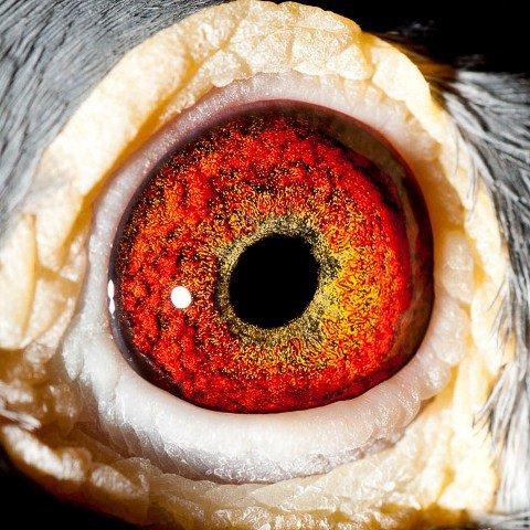 'Johanesburg' eye shot...