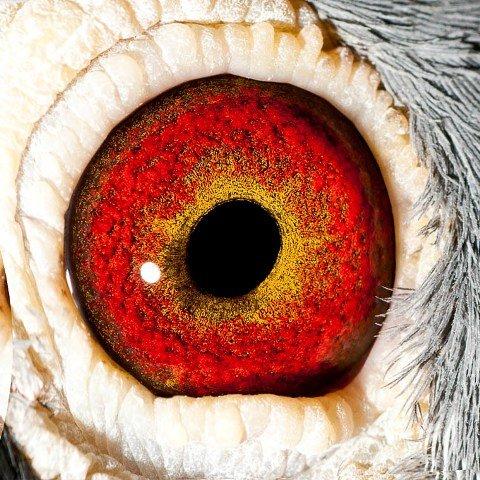 Eye shot of 'Outlaw'...