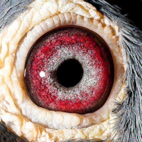 'Star 300' eye shot...
