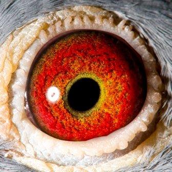 Propre Rik eye shot