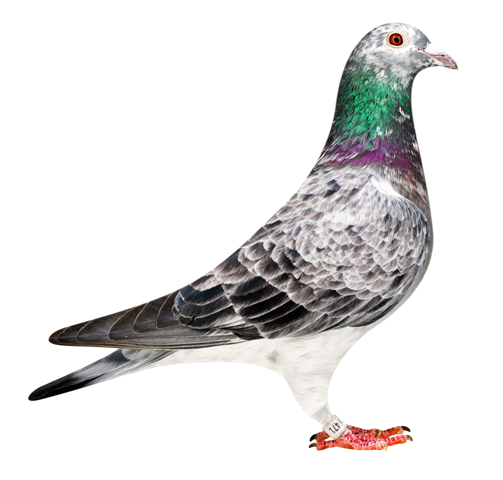 This is the 'Diego Hen' a winner of 2nd national Bordeaux herself and a daughter of the 'Schimmel' winner od the Primus Inter Paras Barcelona award 2003...