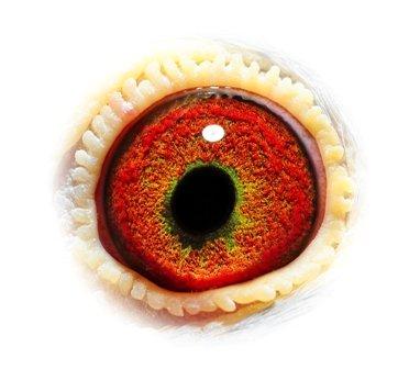 Propere 10 eye BE14-6058810