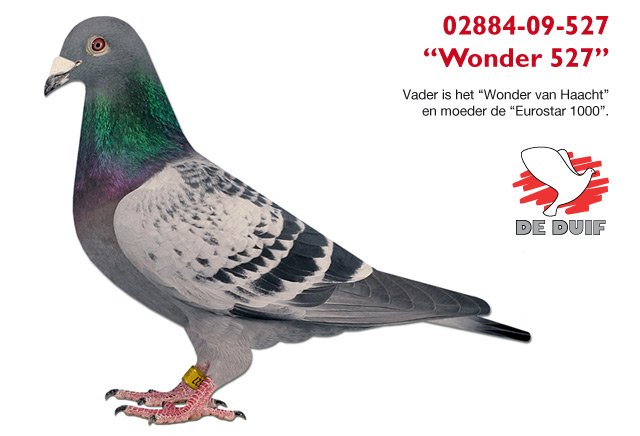 Sander-Horst-Frank_Wonder527