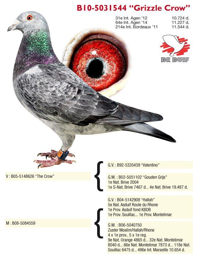 Thone-Jos-10-5031544-Grizzle-Crow