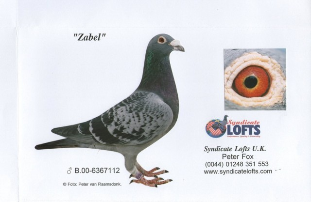 Zabel...bred by Van Dyke direct from Kannibaal. Sire of many fantastic breeders with different hens including 'The Syndicate Cock' of Leach Brothers...