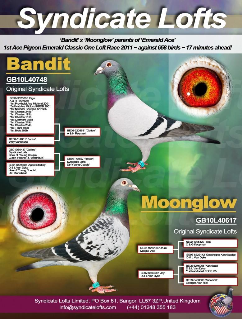 Bandit & Moonglow