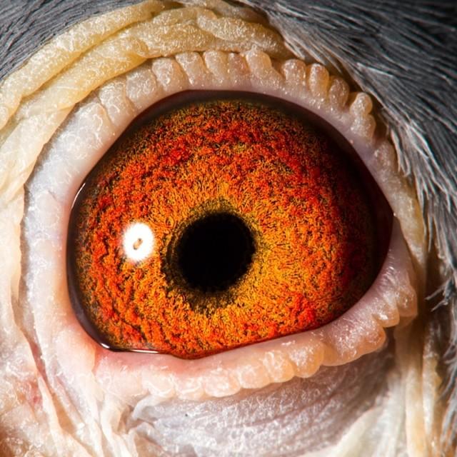 Eye shot of Genie...
