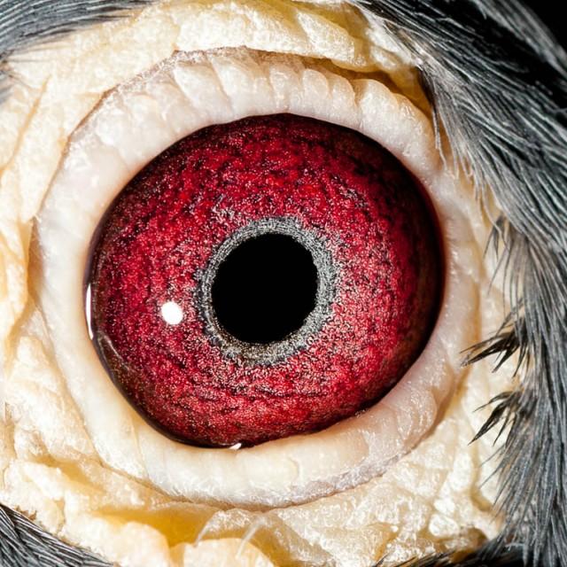 Eye shot of Hannibal...