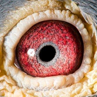 Eye Shot of Matador...