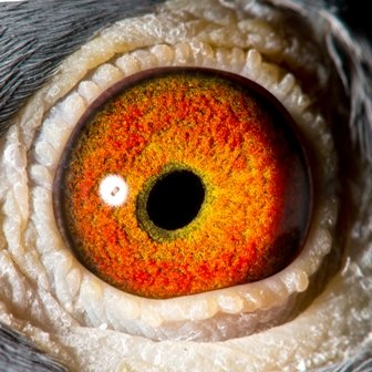 Eye Shot of Amigo 900...