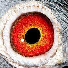 Eye shot of Tempo