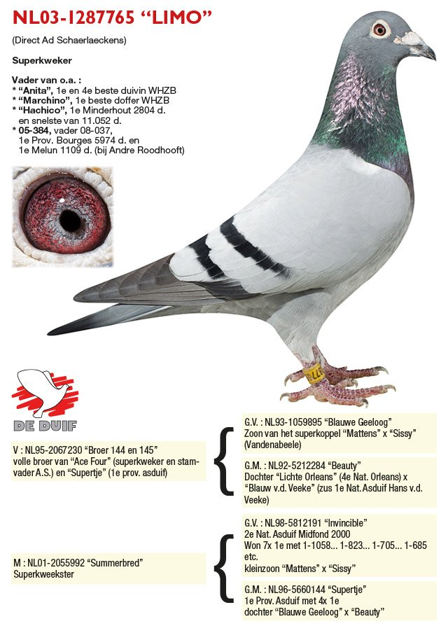 Verbree-Co-Piet_NL03-1287765-LIMO