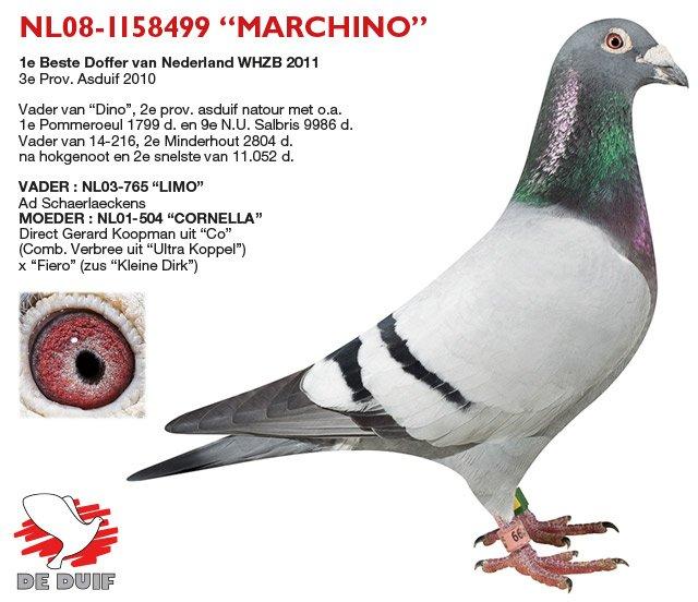 Verbree-Co-Piet_NL08-1158499-MARCHINO