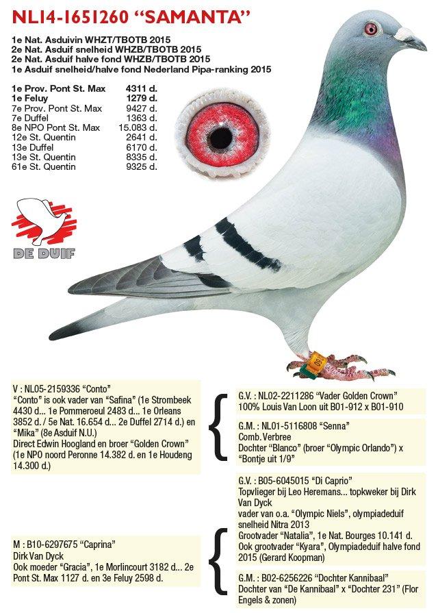 Verbree-Co-Piet_NL14-1651260-SAMANTA