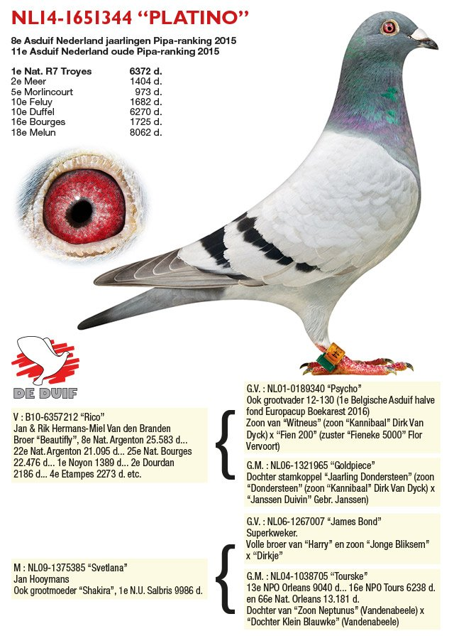Verbree-Co-Piet_NL14-1651344-PLATINO
