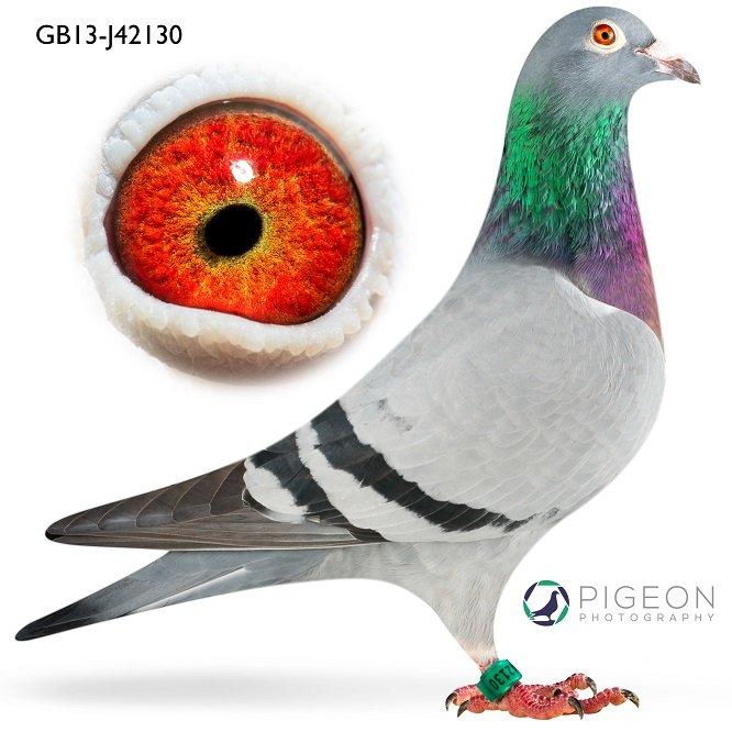 GB13J42130 Lilliwen...
