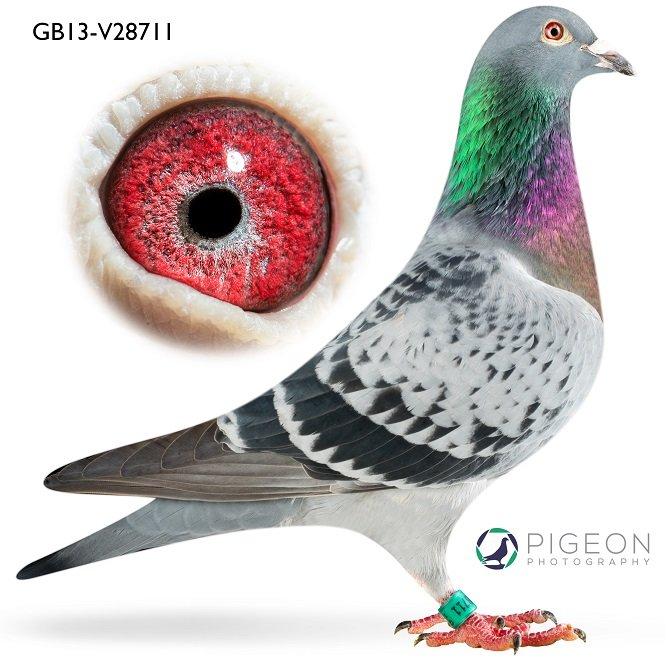 GB13V28711 Eleven...