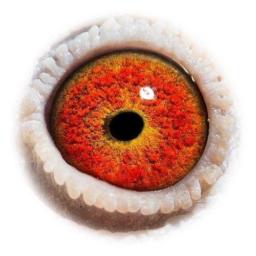 Eye shot of Manon...