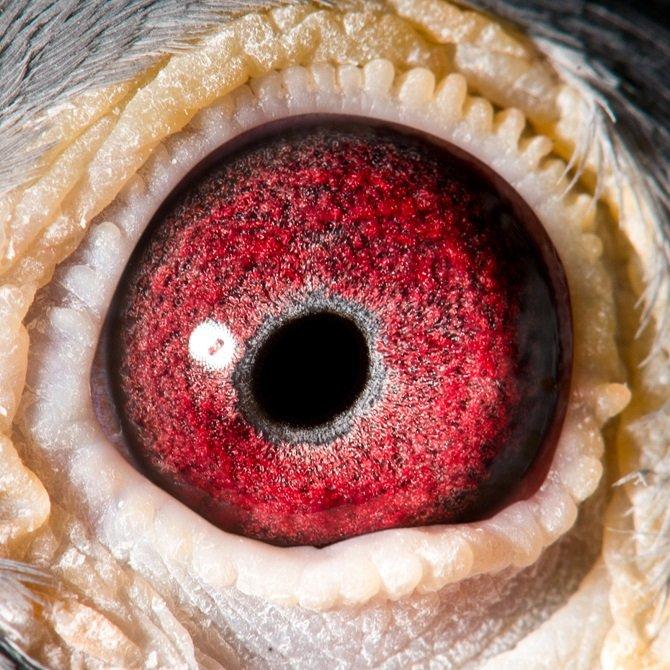 Eye shot Witpen Drum...