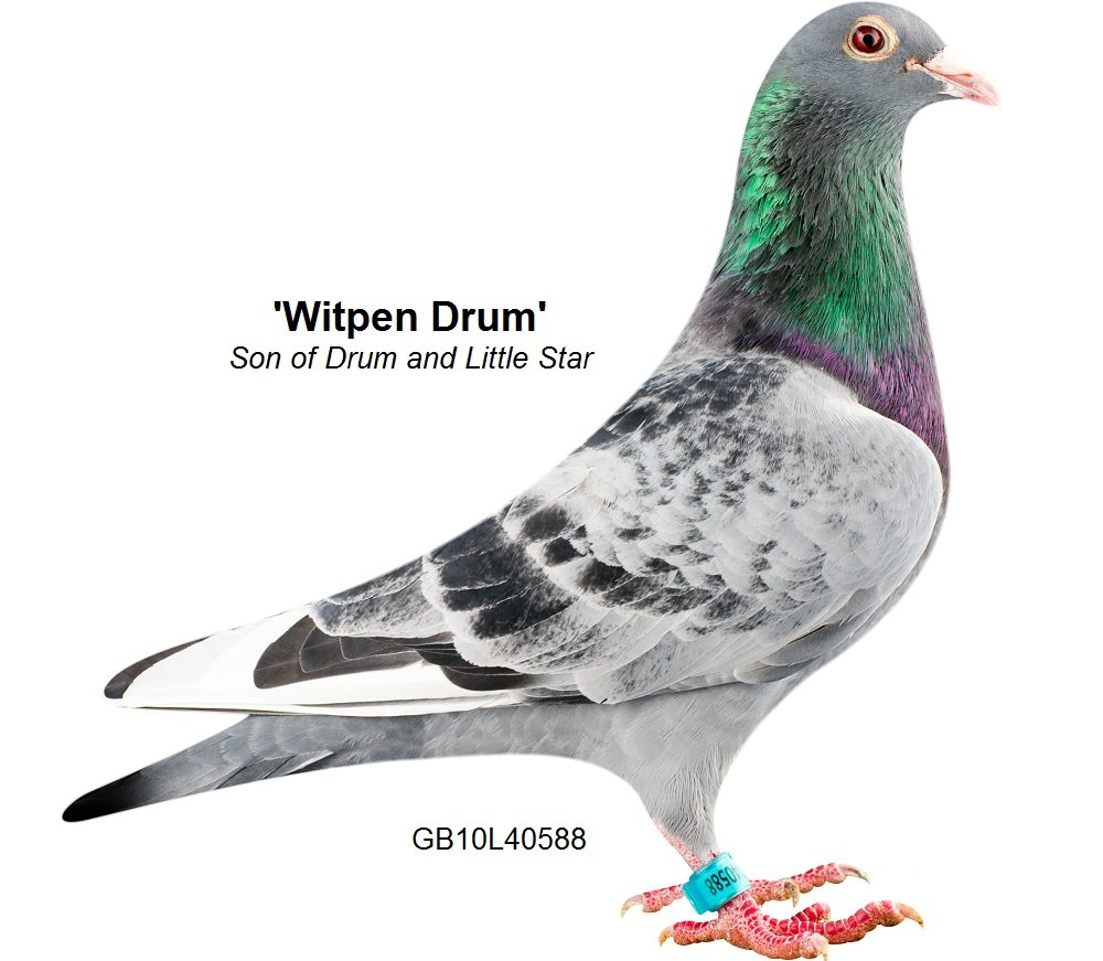 Witpen Drum Sire of Lot 3...