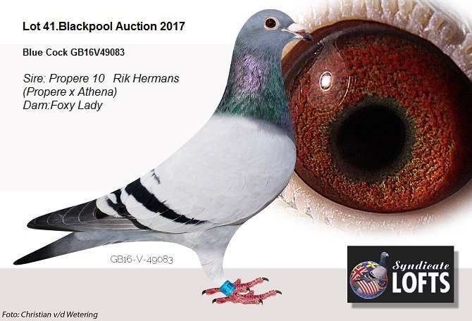 Lot 41 Blackpool auction...